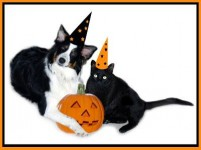 Dog and cat with Halloween hats and pumpkin