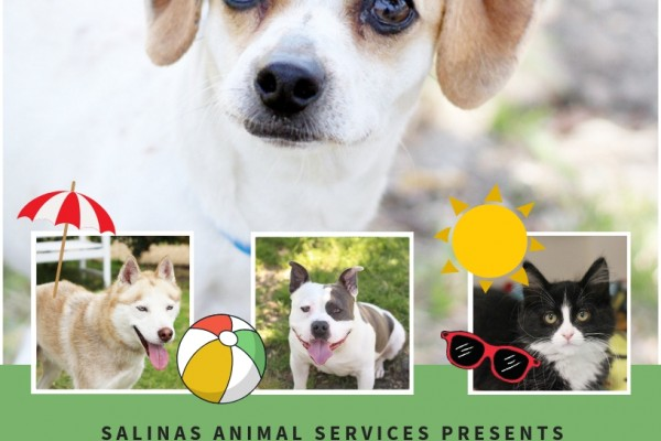 Green flyer, two dogs and one cat advertising adoption special