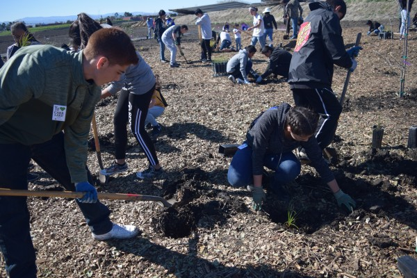 Volunteers work with native plants to create a garden at Carr Lake