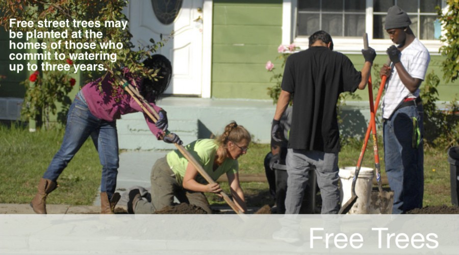 Click to Learn How You Can Get a Free Street Tree