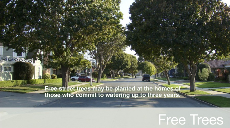 Free street trees may be planted at the homes of those who commit to watering up to three years.