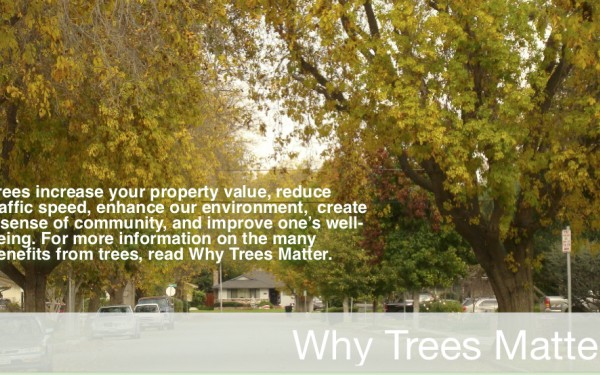 Click to Learn More About Why Trees Matter