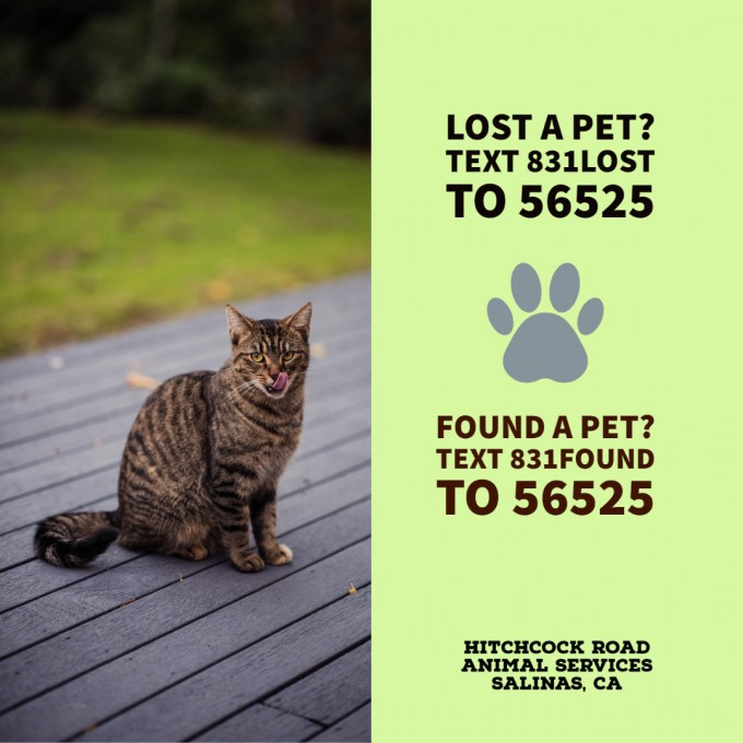 Lost2Found Text photos with cat