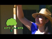 CARING FOR YOUR YOUNG TREE By City Plants