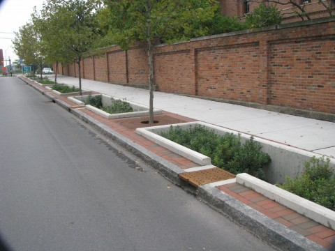 Example Of Bioretention Tree Placement - Urban Street Edge Columbus Ohio - Credit Richard Jennings.