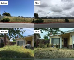 Weed abatement before and afters